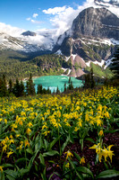 Grinnell Lake with Glacier Lilies
