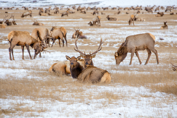 National Elk Refuge outside of Grand Teton National Park